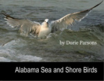 Alabama Sea and Shore Birds