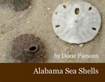 Alabama Sea Shells