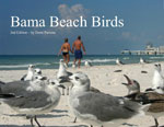 Bama Beach Birds