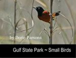 Gulf State Park ~ Small Birds
