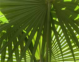 Palmetto Patterns